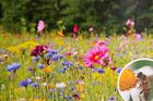 Podziękowania dla gości - Mieszanka roślin miododajnych dzikich, przyjazna pszczołom  (3)